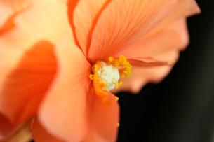 花の写真素材 [FYI01229176]