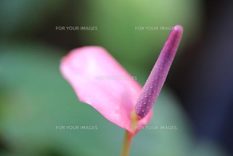 花の写真素材 [FYI01229178]