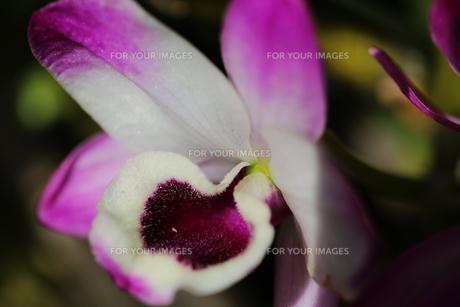 花の写真素材 [FYI01229179]