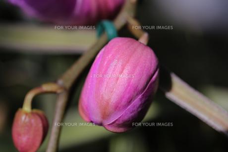 花の写真素材 [FYI01229180]