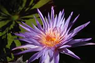 花の写真素材 [FYI01229241]