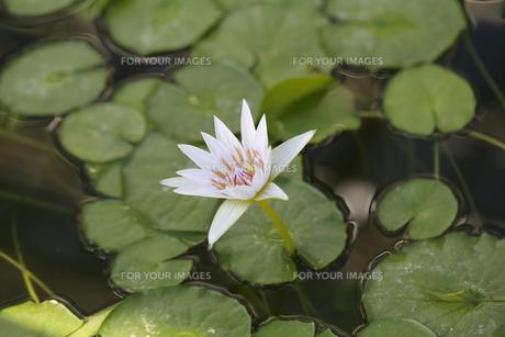 花の写真素材 [FYI01229242]