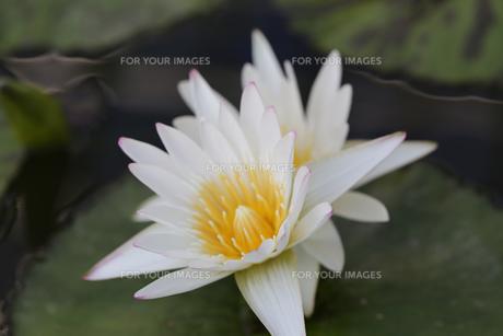 花の写真素材 [FYI01229243]