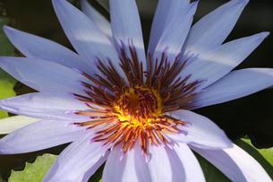 花の写真素材 [FYI01229244]