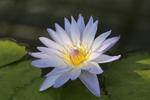 花の写真素材 [FYI01229245]