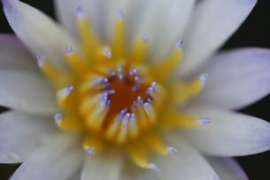 花の写真素材 [FYI01229246]