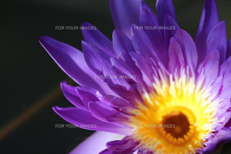 花の写真素材 [FYI01229247]
