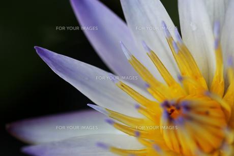 花の写真素材 [FYI01229248]
