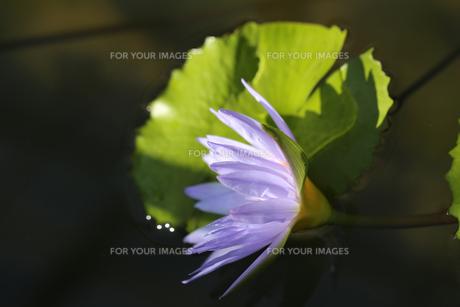 花の写真素材 [FYI01229249]