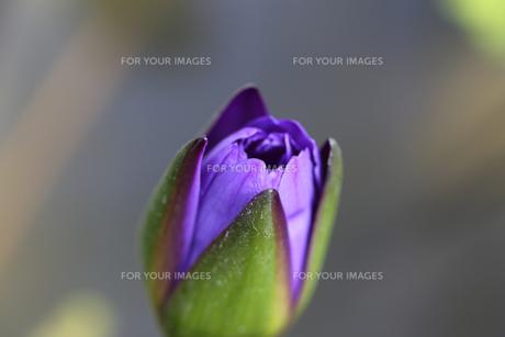 花の写真素材 [FYI01229250]