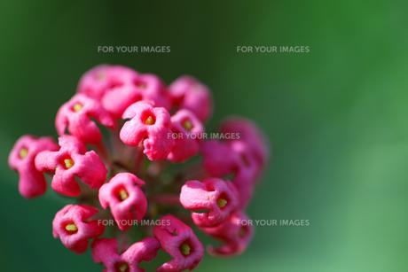 花の写真素材 [FYI01229252]