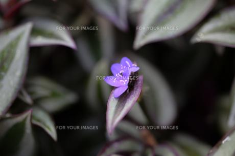 花の写真素材 [FYI01229253]