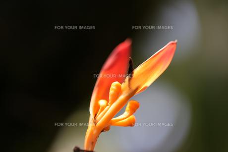 花の写真素材 [FYI01229254]