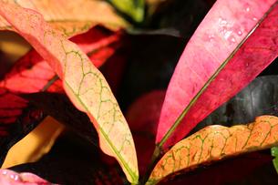 葉の写真素材 [FYI01229257]