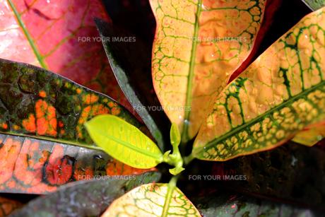 葉の写真素材 [FYI01229258]