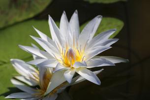 花の写真素材 [FYI01229259]