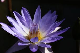 花の写真素材 [FYI01229260]