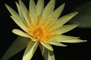花の写真素材 [FYI01229261]