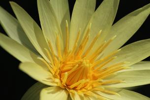 花の写真素材 [FYI01229262]