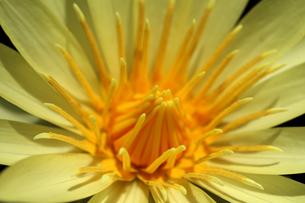 花の写真素材 [FYI01229263]