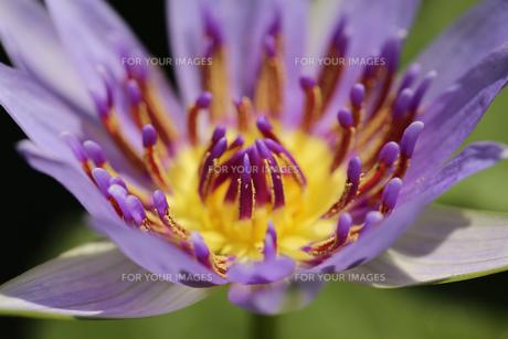 花の写真素材 [FYI01229264]