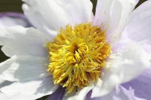 花の写真素材 [FYI01229265]