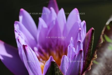 花の写真素材 [FYI01229266]