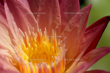 花の写真素材 [FYI01229267]