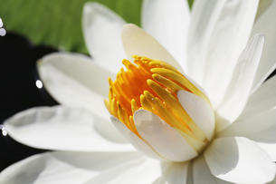 花の写真素材 [FYI01229268]