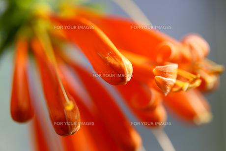 花の写真素材 [FYI01229269]