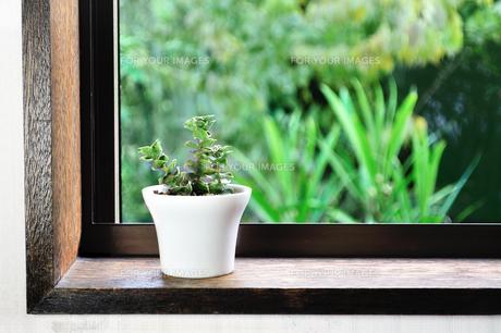 窓辺に置いた多肉植物の写真素材 [FYI01229312]