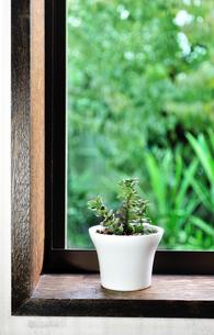 窓辺に置いた多肉植物の写真素材 [FYI01229313]