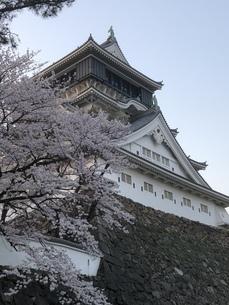 小倉城と桜の写真素材 [FYI01229391]