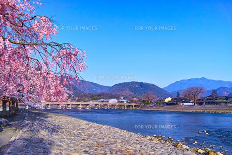 京都嵐山、春の桜咲く渡月橋の写真素材 [FYI01229640]