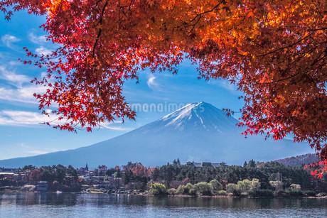紅葉と富士山の写真素材 [FYI01229727]