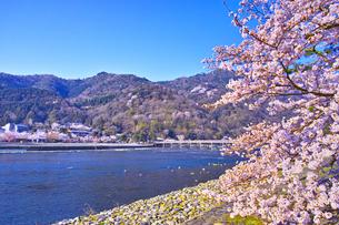 京都嵐山、春の桜咲く渡月橋の写真素材 [FYI01229744]