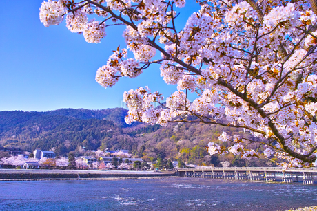 京都嵐山、春の桜咲く渡月橋の写真素材 [FYI01229747]