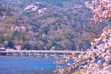 京都嵐山、春の桜咲く渡月橋の写真素材 [FYI01229748]