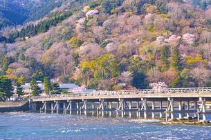 京都嵐山、春の桜咲く渡月橋の写真素材 [FYI01229749]