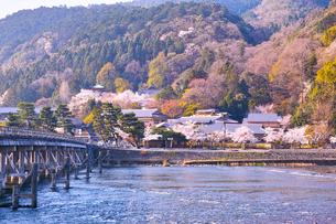京都嵐山、春の桜咲く渡月橋の写真素材 [FYI01229750]