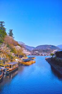 京都嵐山、春の桜咲く桂川の写真素材 [FYI01229767]