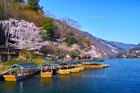 京都嵐山、春の桜咲く桂川の写真素材 [FYI01229770]