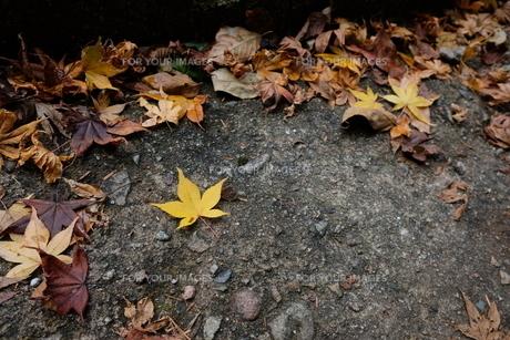 三段峡の紅葉の写真素材 [FYI01229775]