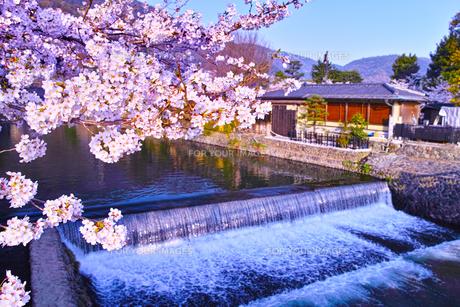 京都嵐山、春の桜咲く中ノ島橋から見る風景の写真素材 [FYI01229818]