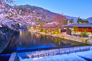 京都嵐山、春の桜咲く中ノ島橋から見る風景の写真素材 [FYI01229819]