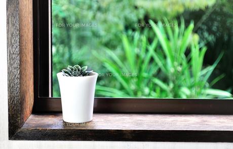 窓辺に置いた多肉植物の写真素材 [FYI01230008]