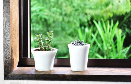 窓辺に置いた多肉植物の写真素材 [FYI01230009]