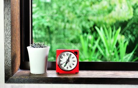 窓辺に置いた目覚まし時計と多肉植物の写真素材 [FYI01230013]