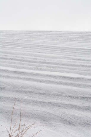 融雪剤が撒かれた雪の畑の写真素材 [FYI01230049]