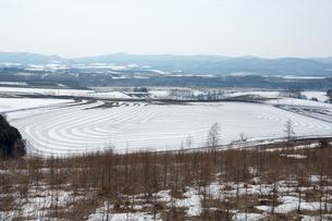 融雪剤が撒かれた雪の畑の写真素材 [FYI01230055]